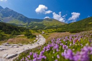 heather mountians tatry